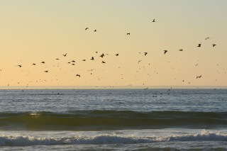 Monterey Bay Sunset and Pelicans