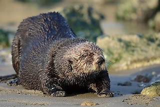 Sea Otter Beach Day